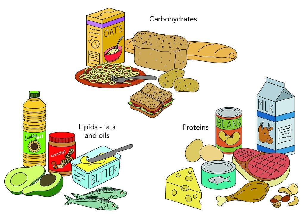 Essential foods good for gaining weight of a child. Plant based food are more recommended for a healthy child growth.